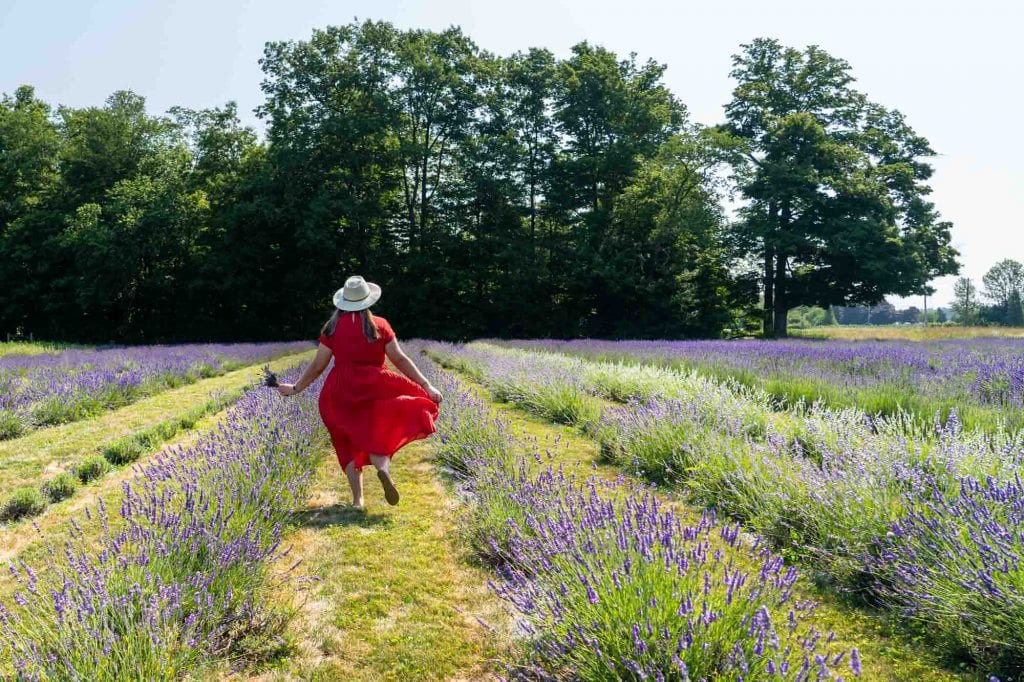 Amanda at Luvin Lavender Farms