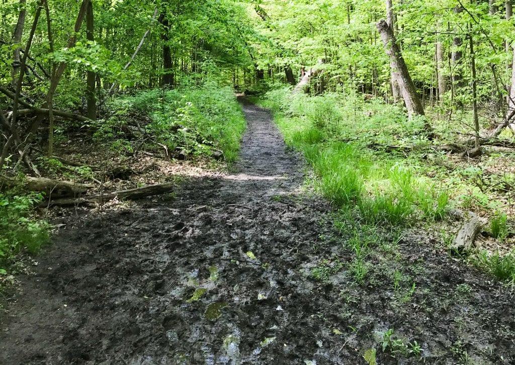 Muddy Buckeye Trail