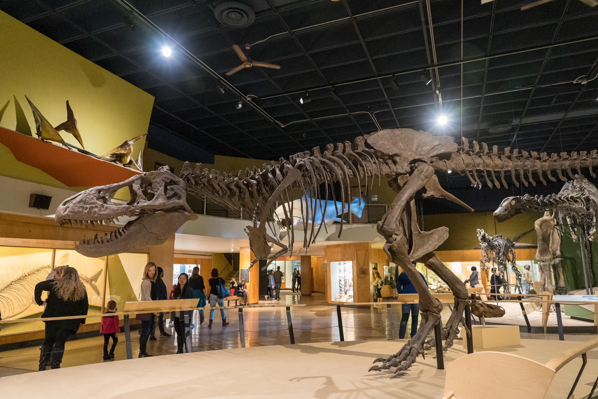 The Complete Guide to Visiting the Cleveland Museum of Natural History: 10 Things You Have to See