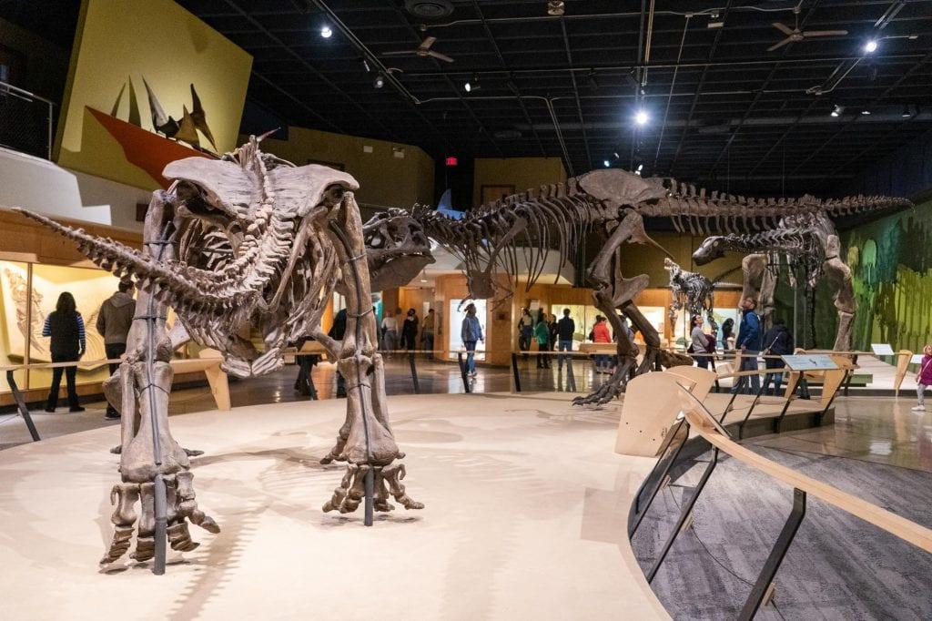 Dinosaurs at CMNH