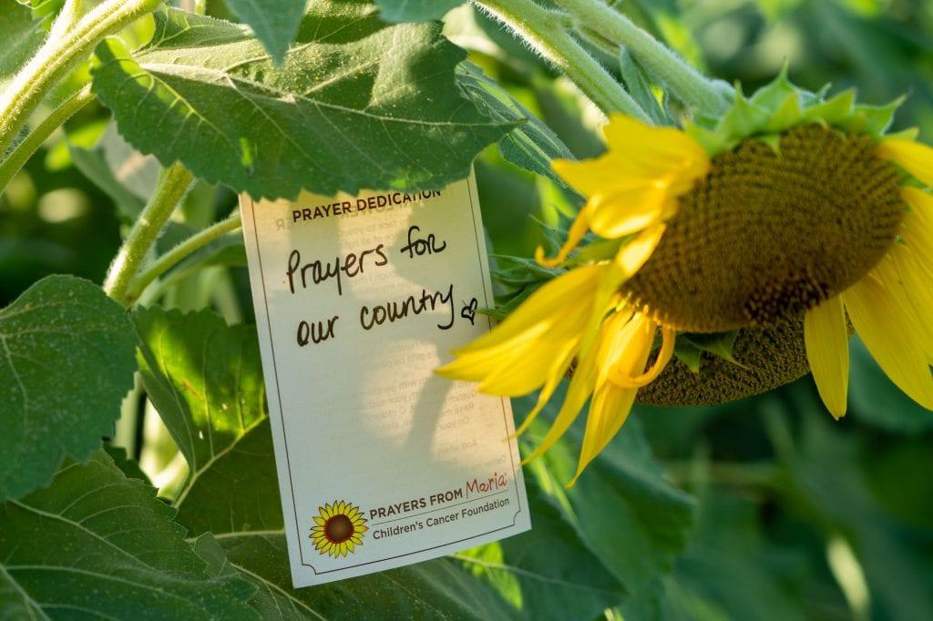 Sunflower dedication