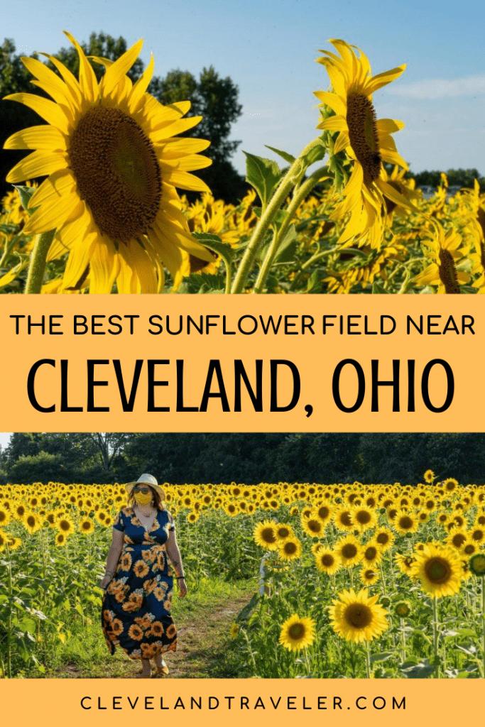 Best sunflower field near Cleveland