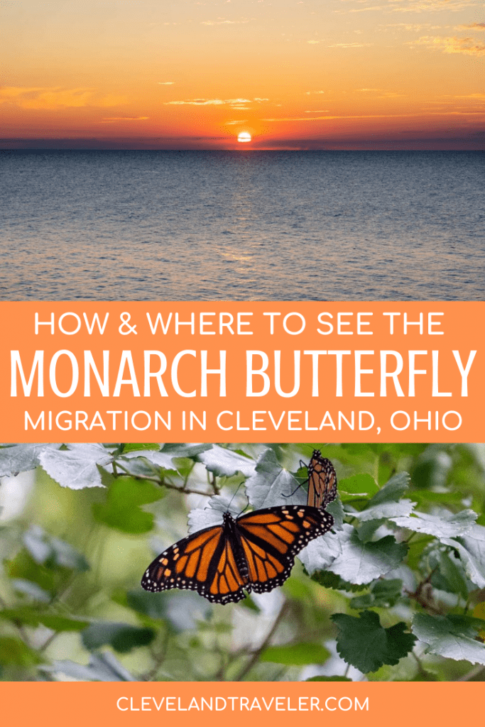 Monarch butterfly migration in Cleveland