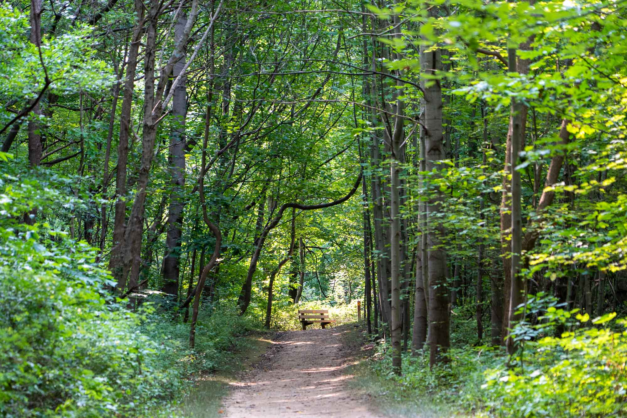 The Ultimate Guide to the Summit Metro Parks Fall Hiking Spree