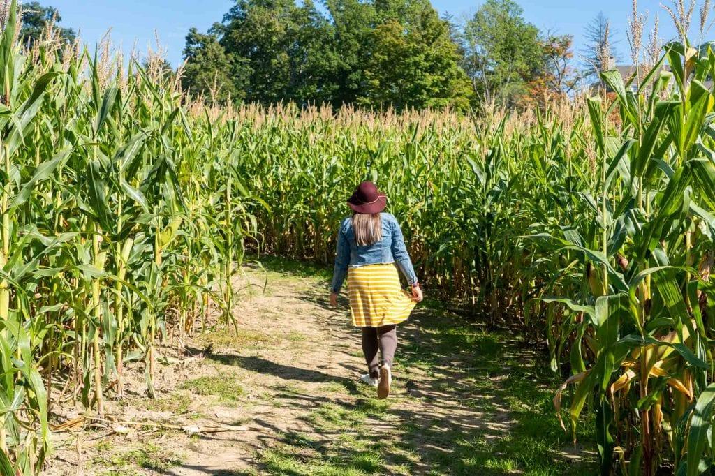 Mapleside Farms corn maze