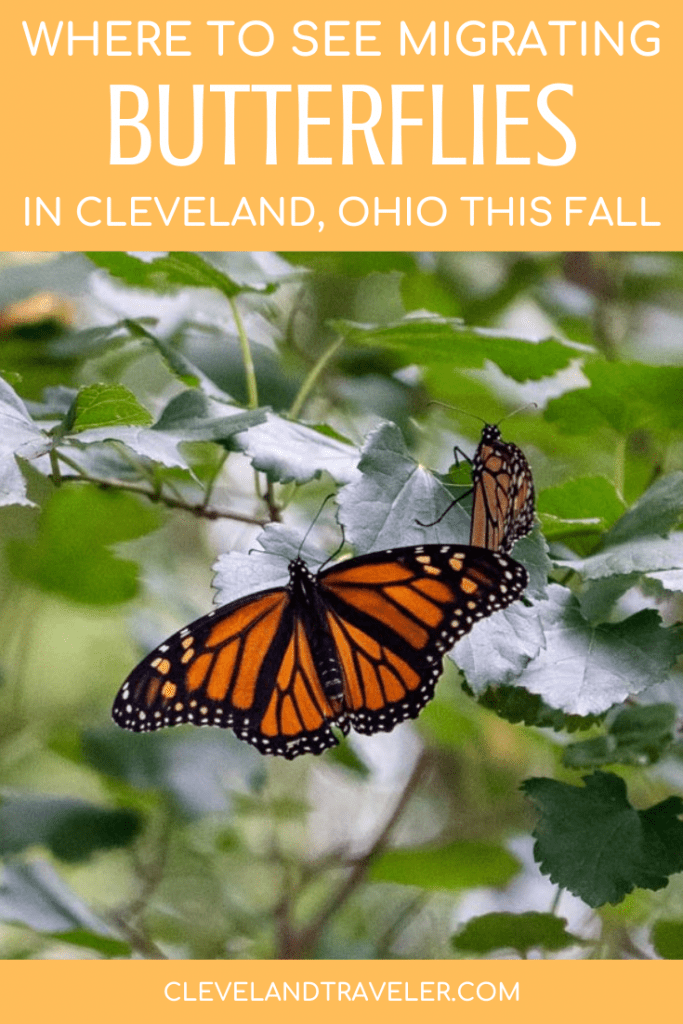 Where to see the monarch migration in Cleveland