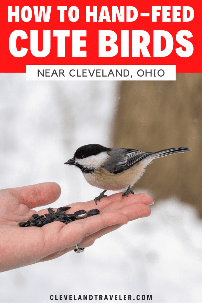How to hand-feed birds near Cleveland