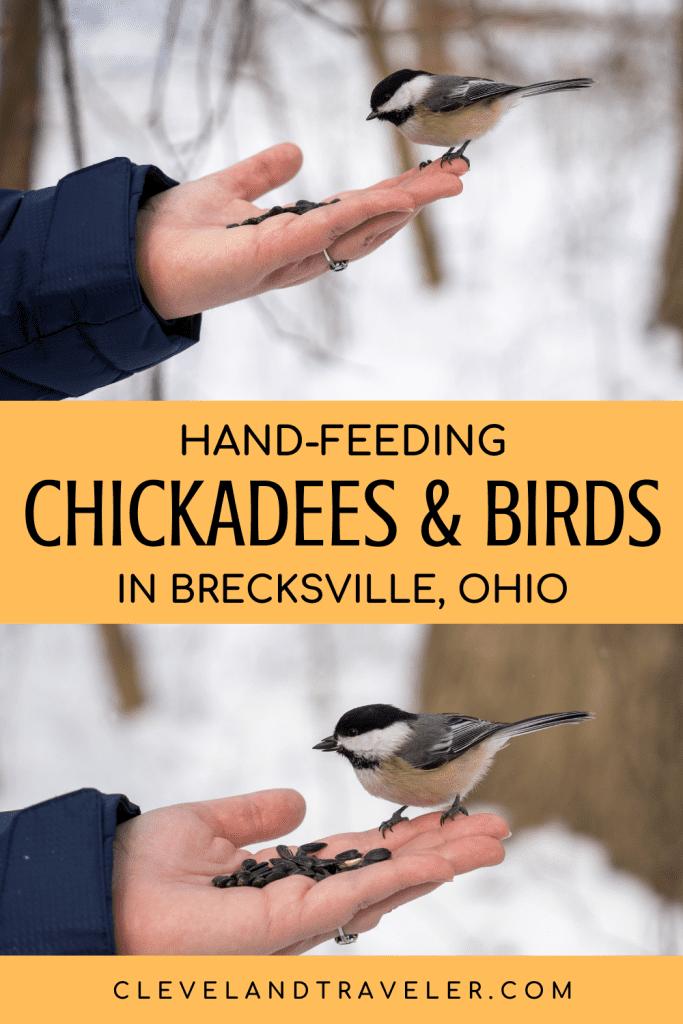 Hand-feeding birds in Brecksville, Ohio