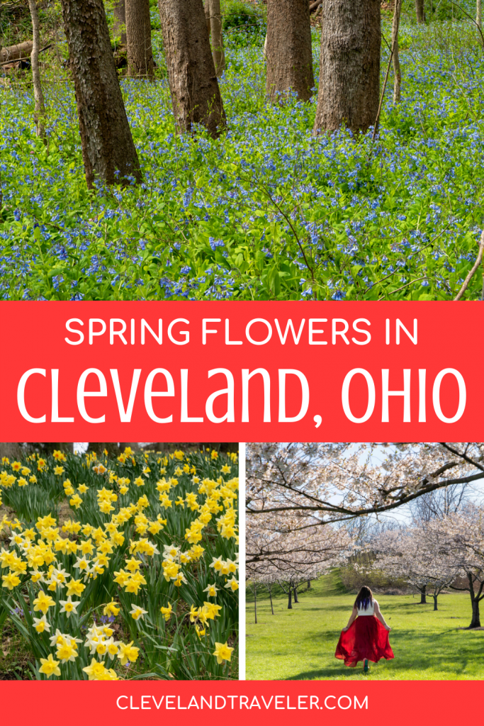 Spring flowers in Cleveland