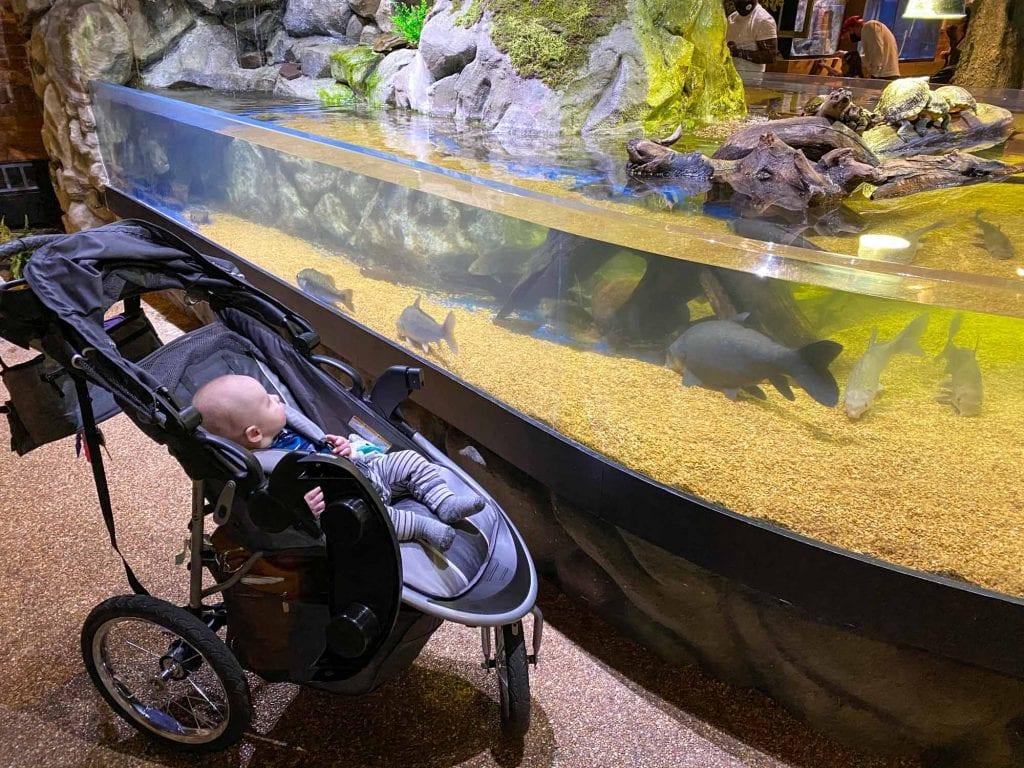 Baby watching fish at Greater Cleveland Aquarium