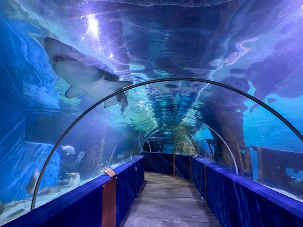 Shark tunnel at Greater Cleveland Aquarium